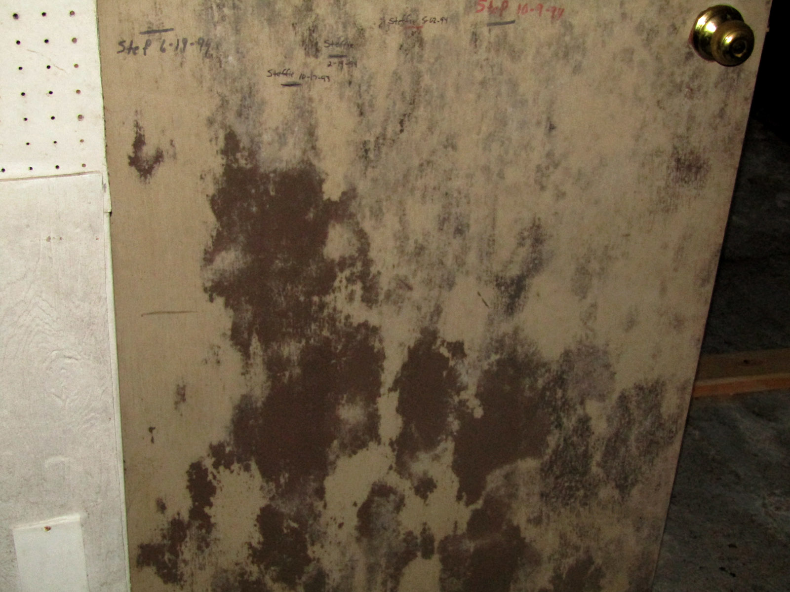 Mold Testing In Virginia